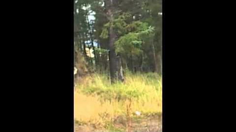 Beast of Blessington - Bigfoot spotted in Ireland
