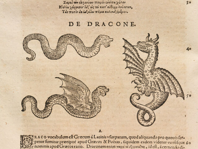 File:Dragonsn'SkySerpents.jpg