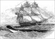 Hms-daedalus-sea-serpent