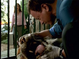 File:Zoo York.png