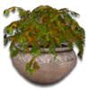 Hide claypot03
