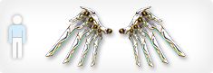 Kal-el wing