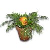 Hide potted plant3