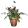 Hide potted plant2