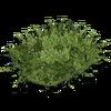 Hide bushgreenbig