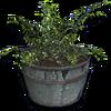 Hide flower barrel