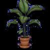 Hide plant01