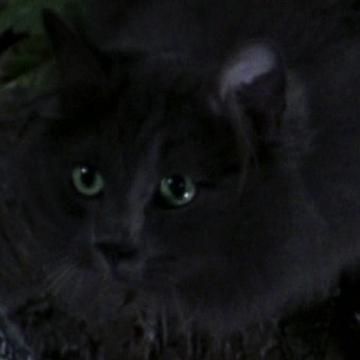 Unnamed Grey Cat Stuart Little C Syde S Wiki Fandom