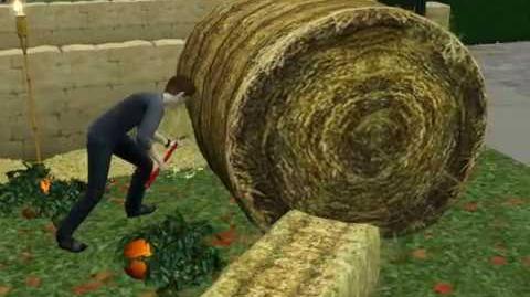 Scattering Hay