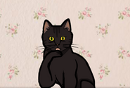 CatBirthday
