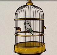 Harvey my parrot