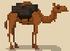 Animal - Camel