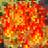 Terrain fire