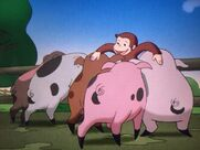 George and the pigs