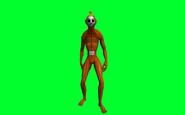 Orange tubby