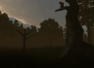 During dusk