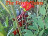 The Feral Plains/Volume I