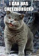 I-can-has-cheezburger-1-