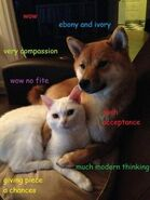 Doge with Cate