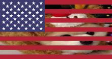 Secretdogusa