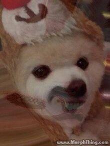 Secretdogwithteeth