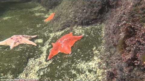 California Tide Pool at SeaWorld San Diego
