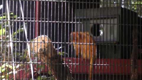 Habitat Habitat II, Animal Kingdom, Walt Disney World (HD 1080p)