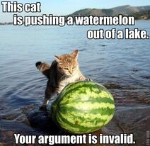 Cat Pushing Watermelon Out of lake