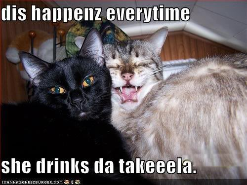 Funny Cat Drinking Meme : Image funny pictures cat takes bad photos when he drinks tequila