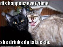 Funny-pictures-cat-takes-bad-photos-when-he-drinks-tequila