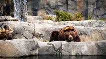 02539 bearslife 1366x768