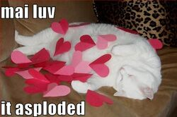 Funny-pictures-your-cats-love-has-exploded-everywhere