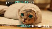 Chillaxcat