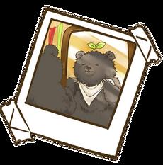 Bearnie