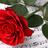 RoseLily144's avatar