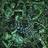 Archduk3's avatar