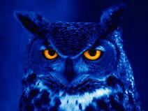 1501night owl 1