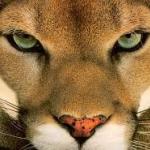 PumatheLeader's avatar