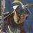 Ronshol The Black's avatar