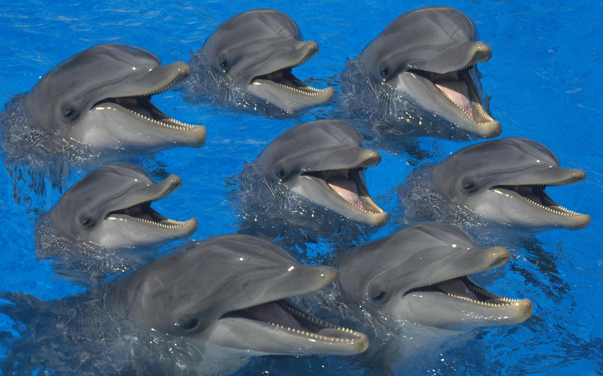 Dolphins-221921