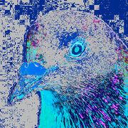 Le pigeon face