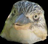 That stupid whore faced kookaburra head