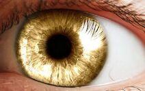 Goldeye