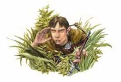 A half-elf harper agent