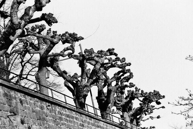 File:Just trees.jpg