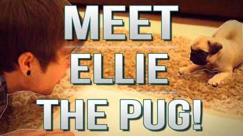 TDM Vlogs MEET ELLIE THE PUG! Episode 17