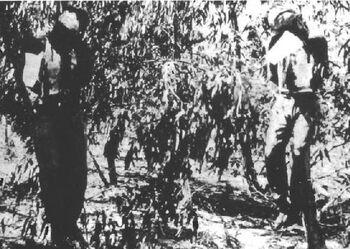 Hanged sergeants