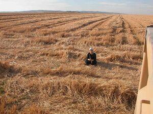 Grein field a gadash Maon