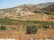 Valey cana from Elmatan 3