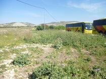 Tel Dothan 03
